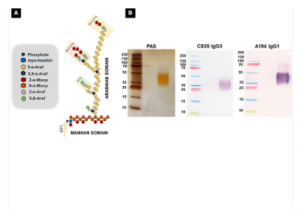 Immobilization of Proteinase K for urine pretreatment to improve diagnostic accuracy of active tuberculosis